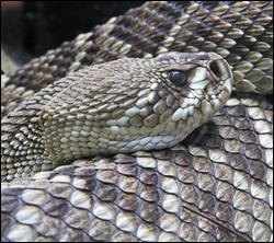 snake removal South Carolina