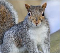 squirrel control South Carolina